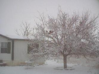 A typical winter scene during our seasonal ice storms